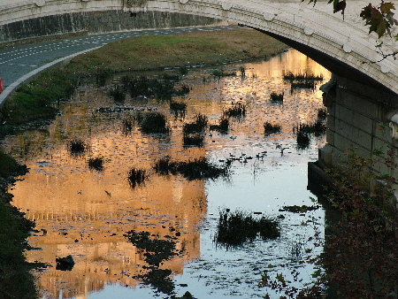 Birds gather at sunset among grasses near the Tiber's Vittorio Emanuele II bridge in Rome